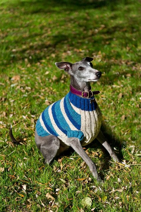 Where to Find a Large Sweater For the Dog - Post Thumbnail